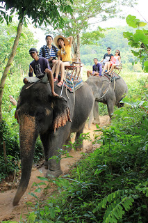 Kinnaree Elephant Camp